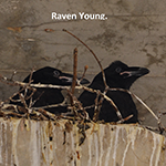 Raven young